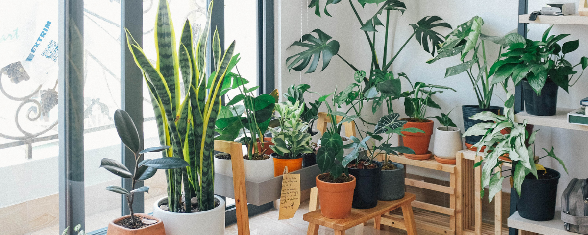 How Indoor Plants Can Improve the Vibrance of Your Home